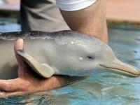 Υπέροχη διάσωση μικρού δελφινιού – Είχε μπλεχτεί σε πλαστική σακούλα