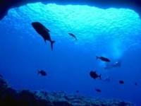 Ειρηνικός ωκεανός: Το 98% του βυθού του καλύπτεται από πτώματα