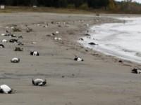 Νεκρά πτηνά γέμισε ο Ατλαντικός