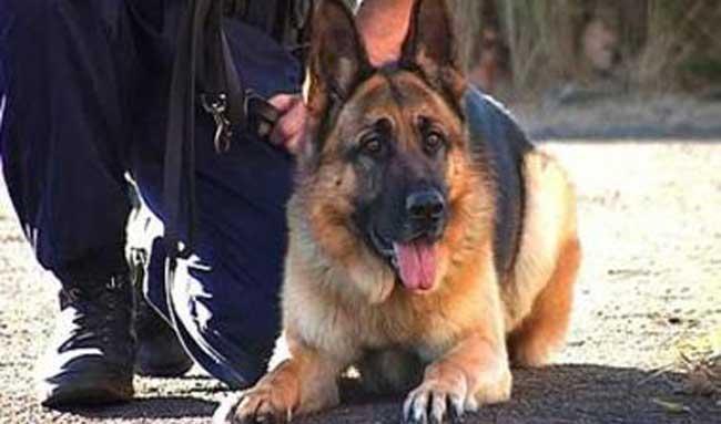 Ο σκύλος εντόπισε την ηρωίνη στο αυτοκίνητο  43χρονου  στην Άρτα
