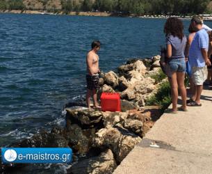 Τραυματισμένη καρέτα – καρέτα στην παραλία της Αμφιλοχίας
