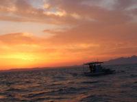 Ψαρεύοντας τον χρυσό του Αμβρακικού: Οι γαρίδες που θρέφουν εκατοντάδες οικογένειες