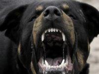 Σκύλος κατακρεούργησε 30χρονο – Νοσηλεύεται σε κρίσιμη κατάσταση