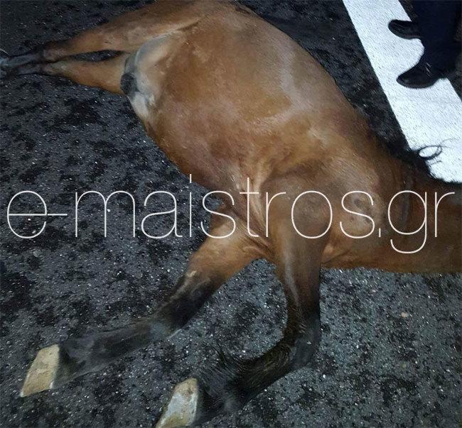 Τρόμος στην Ιονία Οδό – Τέσσερα νεκρά άλογα μετά από σύγκρουση