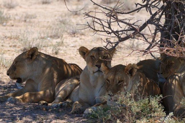 Απειλείται η ανθρώπινη ζωή': Σε εξέλιξη ο έκτος μαζικός αφανισμός ειδών
