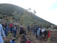 Πάνω από 170 δένδρα φυτεύτηκαν στην περιοχή Ομπλού- Κεφαλοβρύσου
