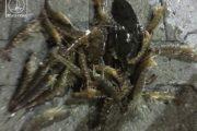 Η «Ωκεανίς» έφερε γαρίδες, γλώσσες και σουπιές