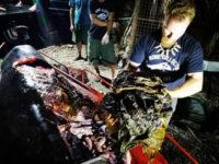 Καταδικάζουμε σε αφανισμό τα ζώα: Βρήκαν στην κοιλιά νεκρής φάλαινας 40 κιλά πλαστικές σακούλες