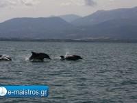 dolphin_kostas_pappas.jpg10