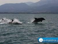 dolphin_kostas_pappas.jpg11