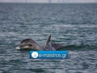 dolphin_kostas_pappas.jpg12