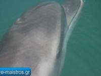 dolphin_kostas_pappas.jpg14