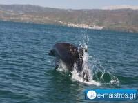 dolphin_kostas_pappas.jpg2