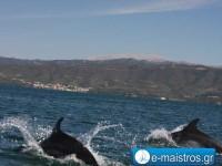 dolphin_kostas_pappas.jpg3