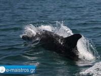 dolphin_kostas_pappas.jpg6