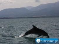 dolphin_kostas_pappas.jpg8