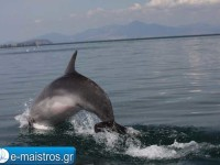 dolphin_kostas_pappas.jpg9