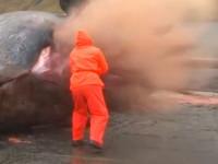 Απίστευτη έκρηξη φάλαινας στα νησιά Φερόε
