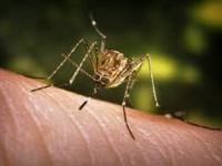 Προληπτικές ενέργειες για την καταπολέμηση των κουνουπιών