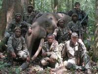 Αφρική: Πάνω από 20 χιλιάδες ελέφαντες θύματα λαθροθηρίας μέσα στο 2013