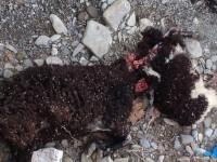 Νεκρά ζώα σε ρέμα στον Κάμπο Αμπελακίου