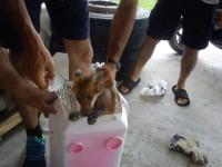 Iωάννινα: Αλεπού έπεσε από ταράτσα πολυκατοικίας