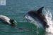 Όταν τα δελφίνια επισκέπτονται την Αμφιλοχία