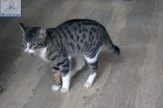 Την εποχή της κρίσης ένας γάτος στην Αμφιλοχία μαζεύει ευρώ