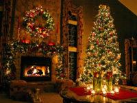 Αυξημένος ο αριθμός των χριστουγεννιάτικων δέντρων που θα διακινηθούν ενόψει Χριστουγέννων