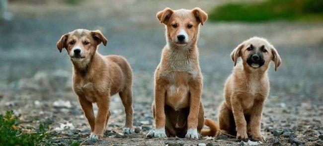 Μήνυμα Αντιδημάρχου Πολιτισμού Σοφίας Ανδρίκουλα για την Παγκόσμια Ημέρα Αδέσποτων Ζώων