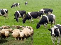 Εκδήλωση για την κτηνοτροφία και τις θέσεις του ΚΚΕ στις 22 Ιούλη