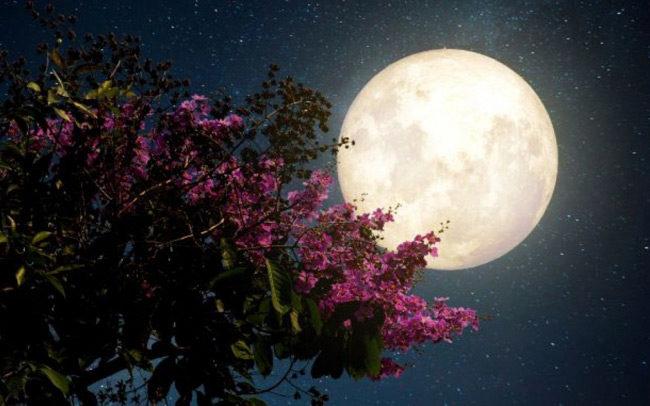 Απόψε η «Πανσέληνος της Φράουλας» ή «Πανσέληνος των Ρόδων»