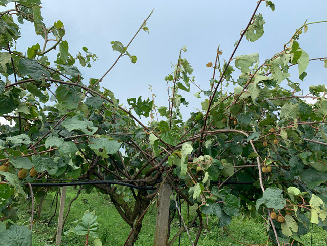 «Αντιμέτωποι με την καταστροφή χιλιάδες αγρότες της Αιτωλοακαρνανίας»