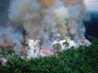 Καταστρέφεται ο Αμαζόνιος – Ο «πνεύμονας» του πλανήτη κινδυνεύει