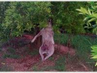 Ήπειρος: Απαγχόνισαν σκύλο  «Δεν αξίζουν την κρεμάλα τα ζώα, αλλά αξίζουν την αγάπη μας»