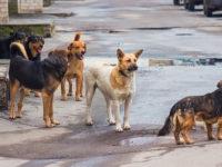 Με 694.000€ Κατασκευή καταφυγίου αδέσποτων ζώων συντροφιάς στο Στράτο του Δήμου Αγρινίου»