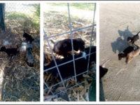 Τρία σκυλάκια στην Μπούκα ζητούν ανάδοχο