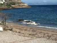 Θαλάσσιο κήτος ξεβράστηκε στην Κακιά Θάλασσα Κερατέας