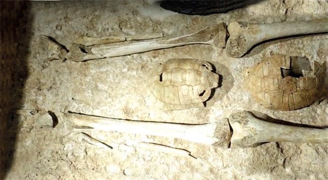 Σπουδαίο αρχαιολογικό εύρημα στην αρχαία Αμβρακία