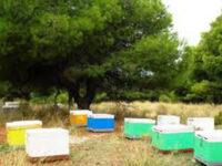 Μετακίνηση των μελισσοσμηνών κατά τη χειμερινή περίοδο