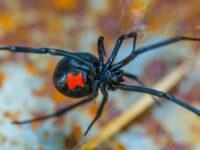 Καλά στη υγεία του το κοριτσάκι που τσιμπήθηκε από δηλητηριώδη αράχνη στην Αμφιλοχία