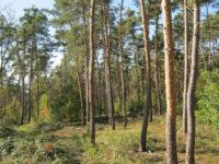 Πρέβεζα: Απαγορεύεται η κυκλοφορία και παραμονή σε εθνικούς δρυμούς και δάση μέχρι της 10 Οκτωβρίου