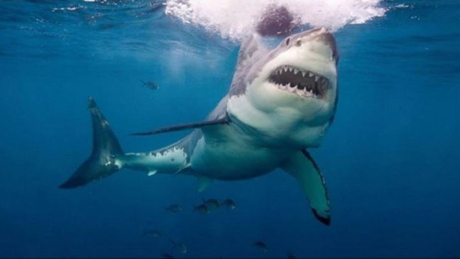 Αυστραλία: Λευκός καρχαρίας κατασπάραξε 15χρονο σέρφερ – Του επιτέθηκε δύο φορές