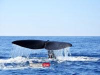 Μάνη: Τεράστια φάλαινα κολυμπούσε δίπλα σε σκάφος – Απίστευτες εικόνες