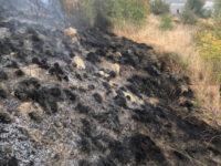 Πυρκαγιά στην Αμφιλοχία – Συο σημείο δύναμη της Πυροσβεστικής