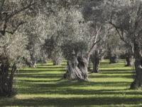 Δωρεάν αναλύσεις εδάφους για ελαιοπαραγωγούς του δήμου Ν. Σκουφά