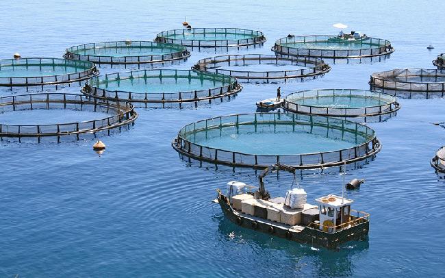 Στο πλευρό της Πολιτείας ο κλάδος των υδατοκαλλιεργειών για την εξάλειψη των εταιρειών-«ζόμπι» στην Ιχθυοκαλλιέργεια
