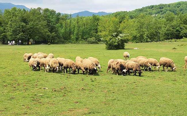 Κύκλωμα εκατομμυρίων ευρώ απέναντι στους κτηνοτρόφους