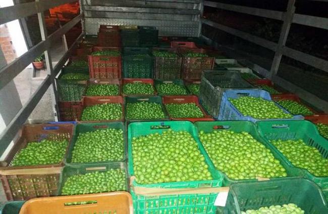 Γιώργος Στύλιος: Πλήγμα για τους ελαιοπαραγωγούς – Φέτος οι τιμές αγοράς της ελιάς είναι κάτω του κόστους.