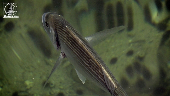 Πανικός στην Αμφιλοχία με την ποσότητα και τα είδη ψαριών